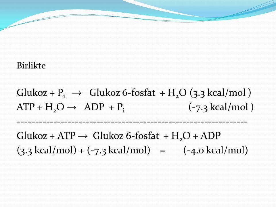 Glukoz + Pi → Glukoz 6-fosfat + H2O (3.3 kcal/mol )