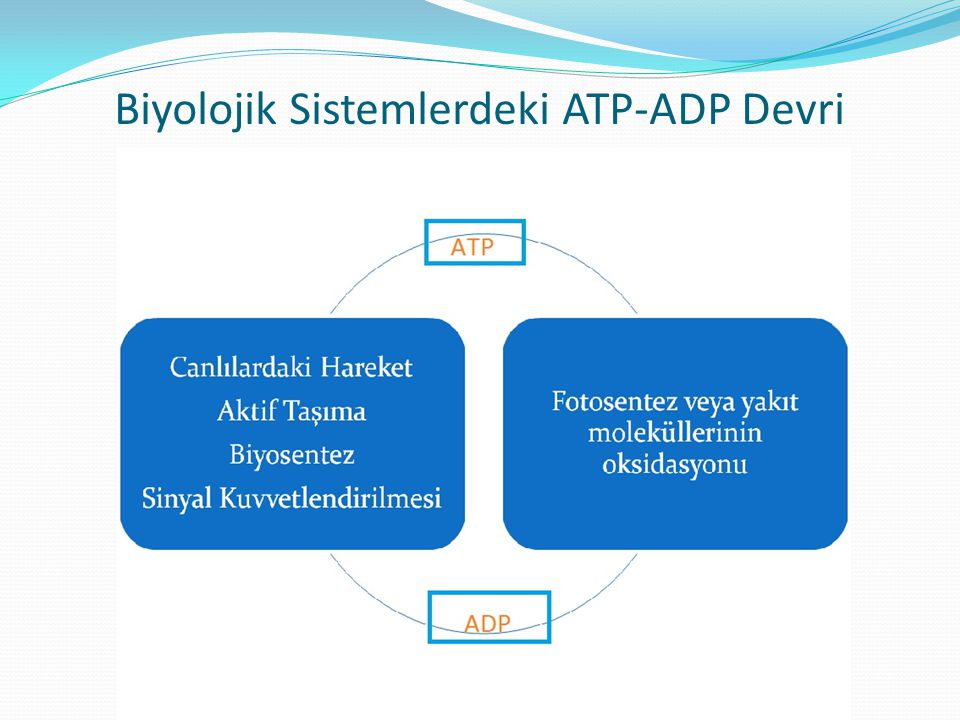 Biyolojik Sistemlerdeki ATP-ADP Devri