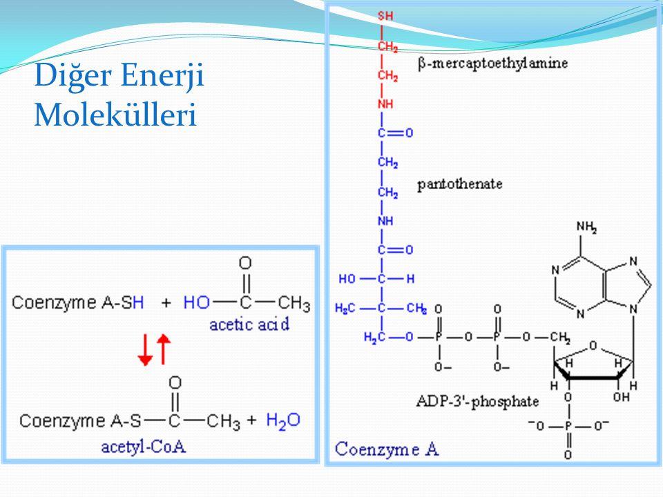 Diğer Enerji Molekülleri