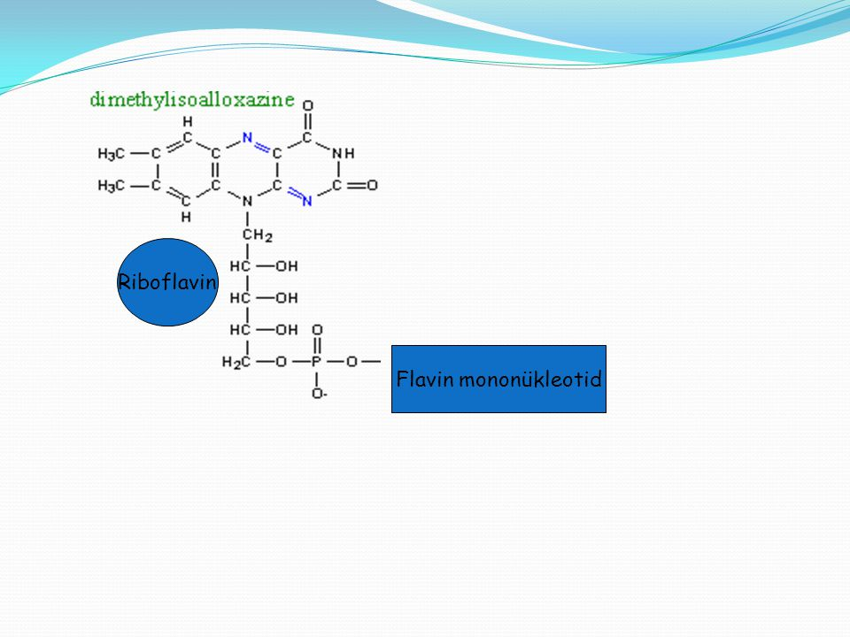 Riboflavin Flavin mononükleotid