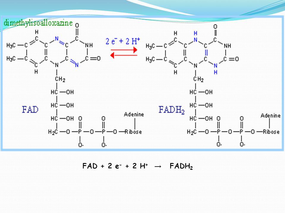 FAD + 2 e- + 2 H+ → FADH2