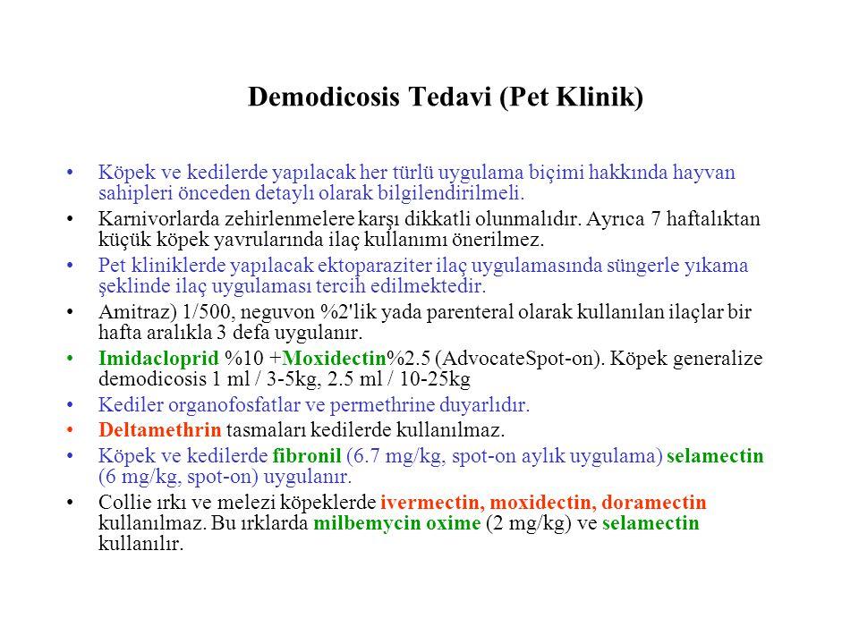 Demodicosis Tedavi (Pet Klinik)