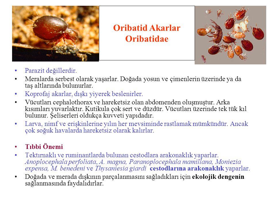 Oribatid Akarlar Oribatidae