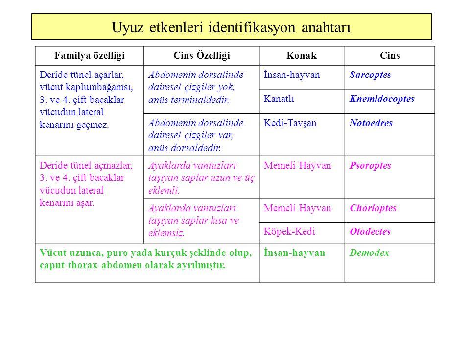 Uyuz etkenleri identifikasyon anahtarı