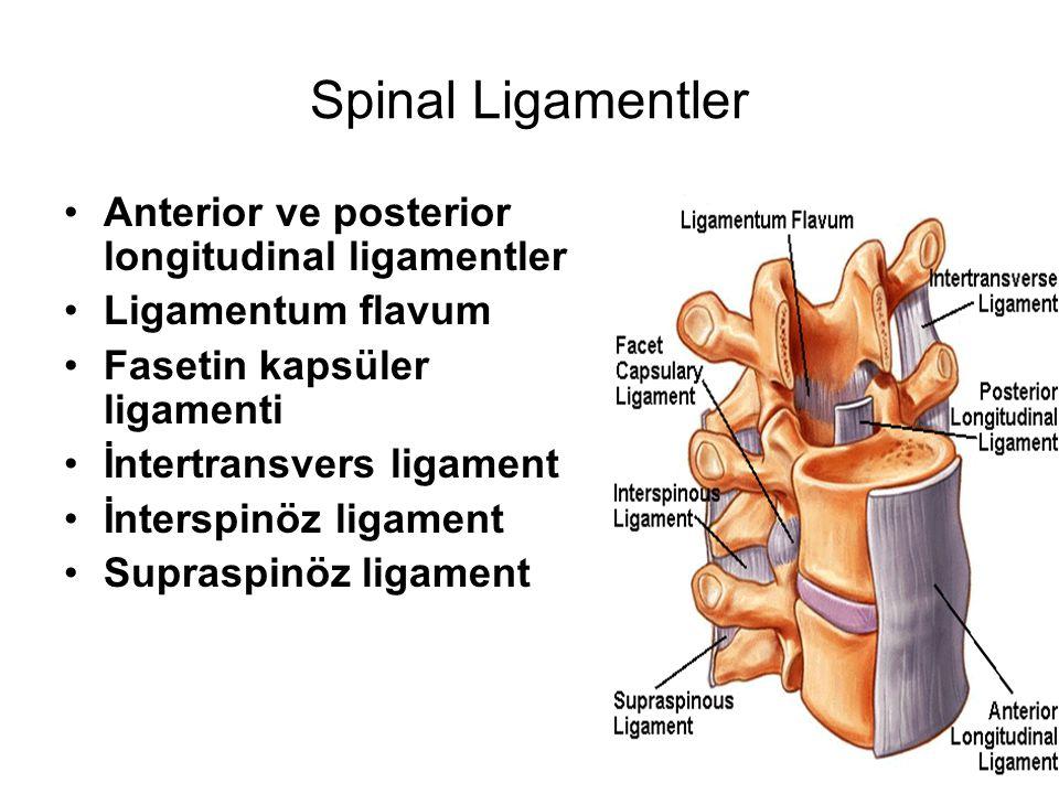 Spinal Ligamentler Anterior ve posterior longitudinal ligamentler