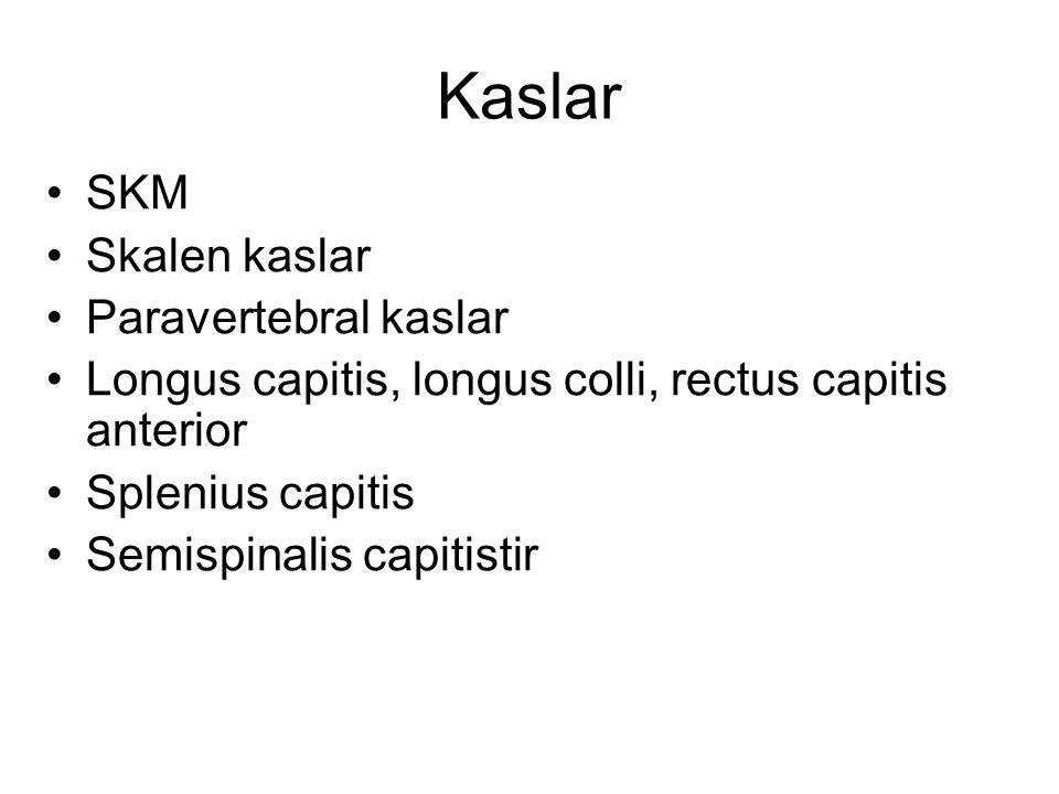 Kaslar SKM Skalen kaslar Paravertebral kaslar