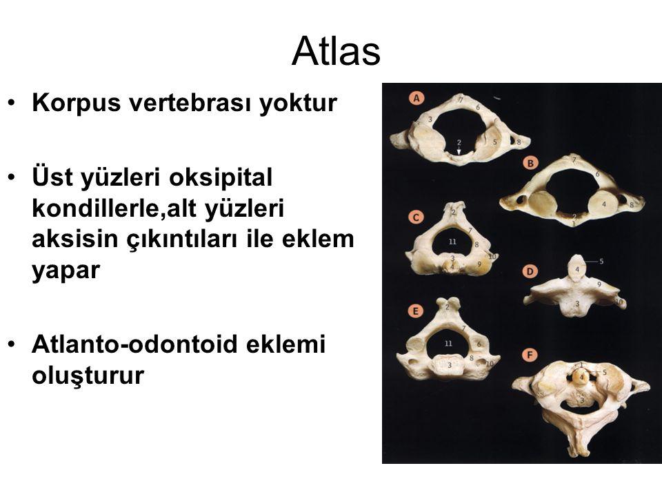 Atlas Korpus vertebrası yoktur