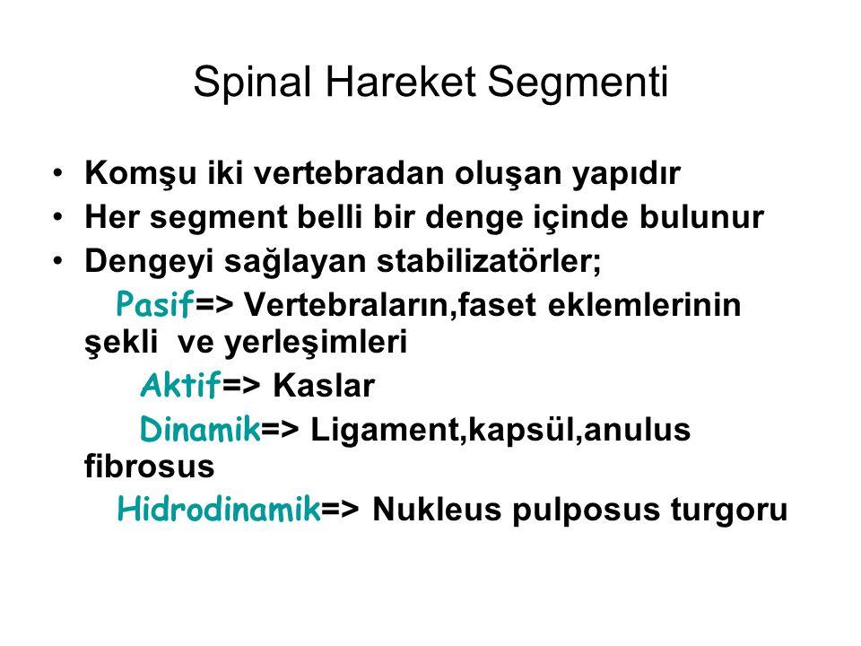 Spinal Hareket Segmenti