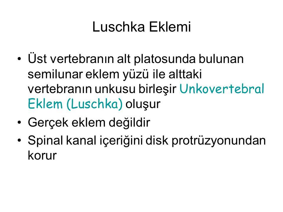 Luschka Eklemi