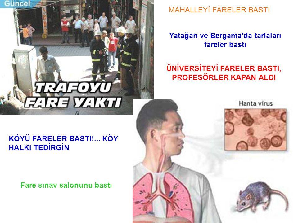 MAHALLEYİ FARELER BASTI