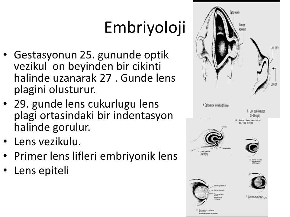 Embriyoloji Gestasyonun 25. gununde optik vezikul on beyinden bir cikinti halinde uzanarak 27 . Gunde lens plagini olusturur.