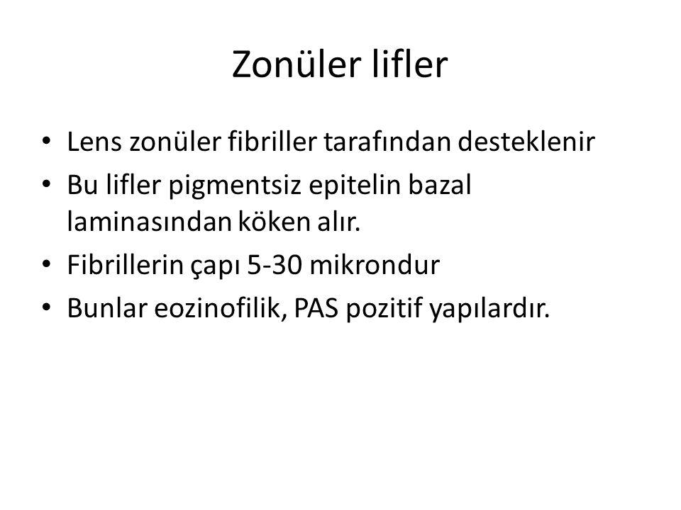 Zonüler lifler Lens zonüler fibriller tarafından desteklenir