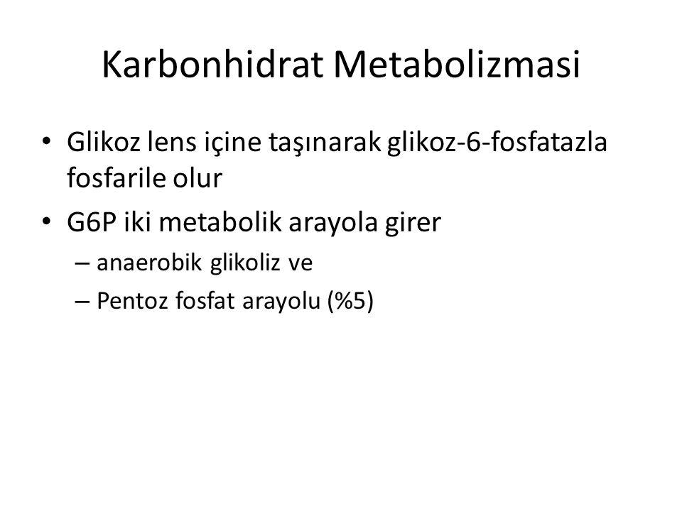 Karbonhidrat Metabolizmasi