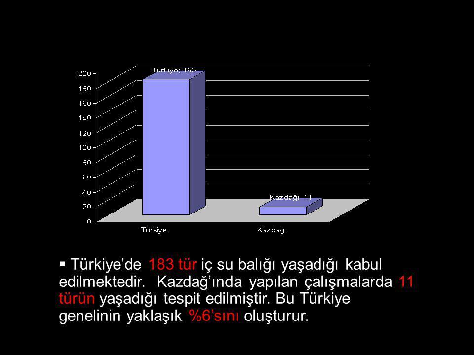 Türkiye'de 183 tür iç su balığı yaşadığı kabul edilmektedir
