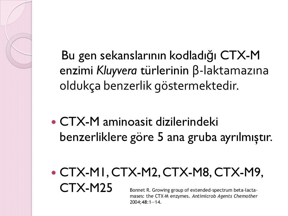 Bu gen sekanslarının kodladığı CTX-M enzimi Kluyvera türlerinin β-laktamazına oldukça benzerlik göstermektedir.