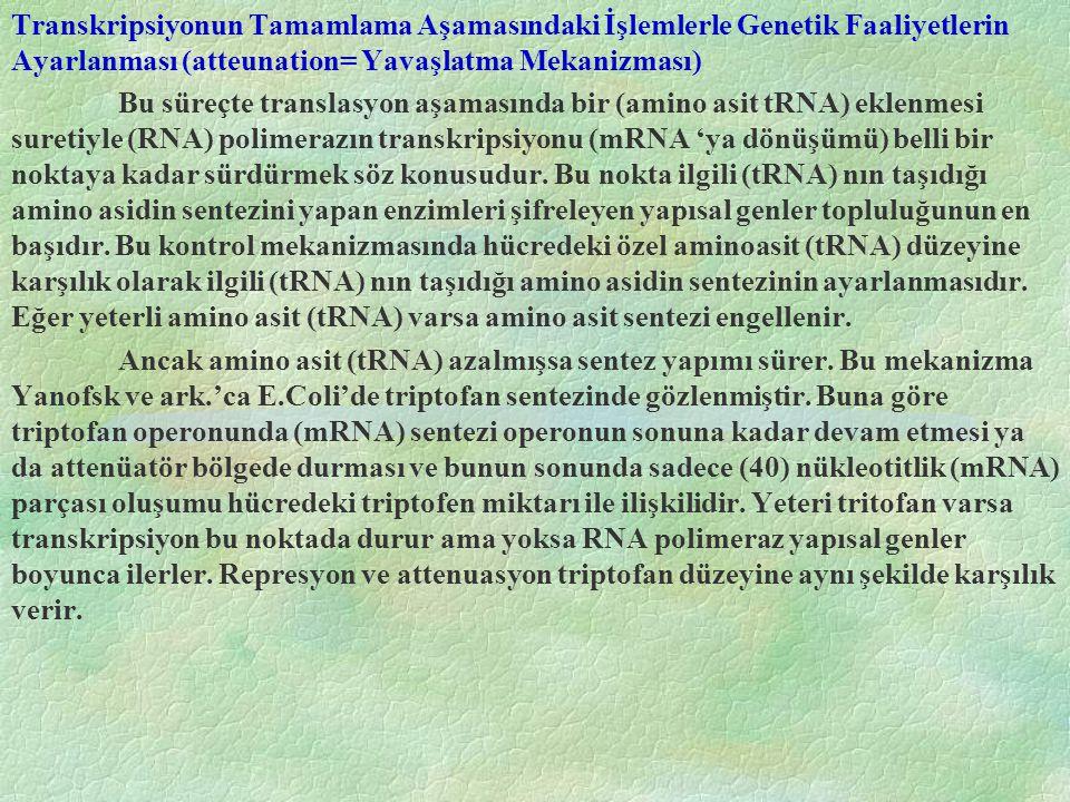 Transkripsiyonun Tamamlama Aşamasındaki İşlemlerle Genetik Faaliyetlerin Ayarlanması (atteunation= Yavaşlatma Mekanizması)