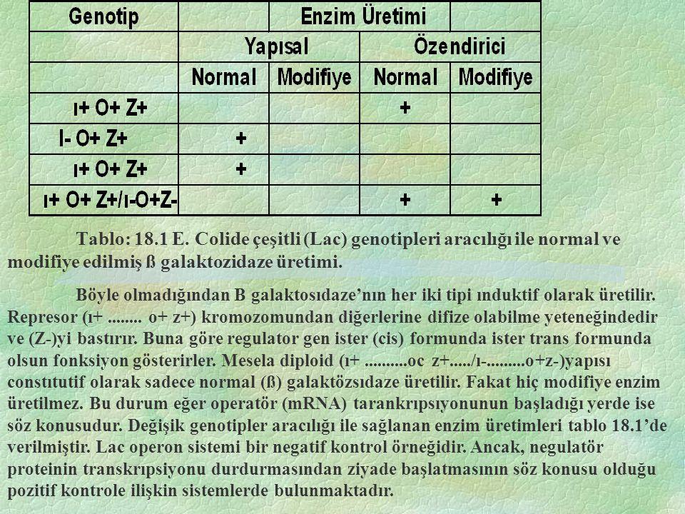 Tablo: 18.1 E. Colide çeşitli (Lac) genotipleri aracılığı ile normal ve modifiye edilmiş ß galaktozidaze üretimi.