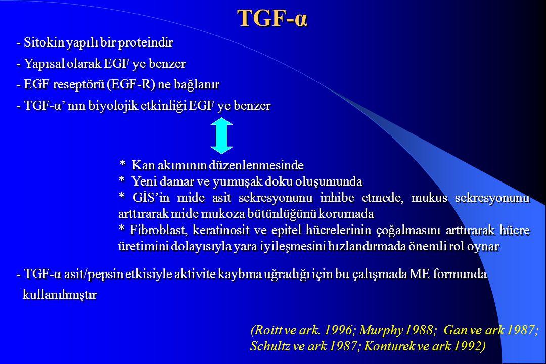 TGF-α - Sitokin yapılı bir proteindir - Yapısal olarak EGF ye benzer