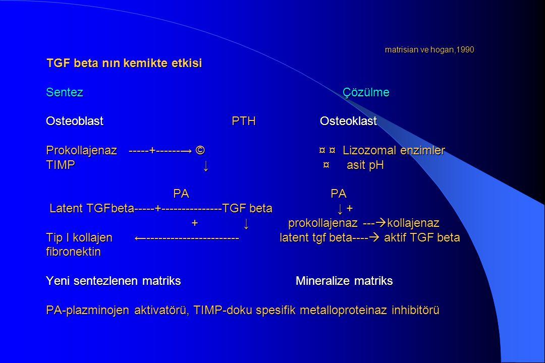 matrisian ve hogan,1990 TGF beta nın kemikte etkisi Sentez Çözülme Osteoblast PTH Osteoklast Prokollajenaz -----+------→ © ¤ ¤ Lizozomal enzimler TIMP ↓ ¤ asit pH PA PA Latent TGFbeta-----+---------------TGF beta ↓ + + ↓ prokollajenaz ---kollajenaz Tip I kollajen ←----------------------- latent tgf beta---- aktif TGF beta fibronektin Yeni sentezlenen matriks Mineralize matriks PA-plazminojen aktivatörü, TIMP-doku spesifik metalloproteinaz inhibitörü