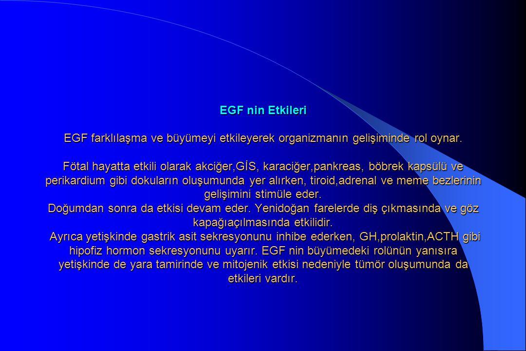 EGF nin Etkileri EGF farklılaşma ve büyümeyi etkileyerek organizmanın gelişiminde rol oynar.