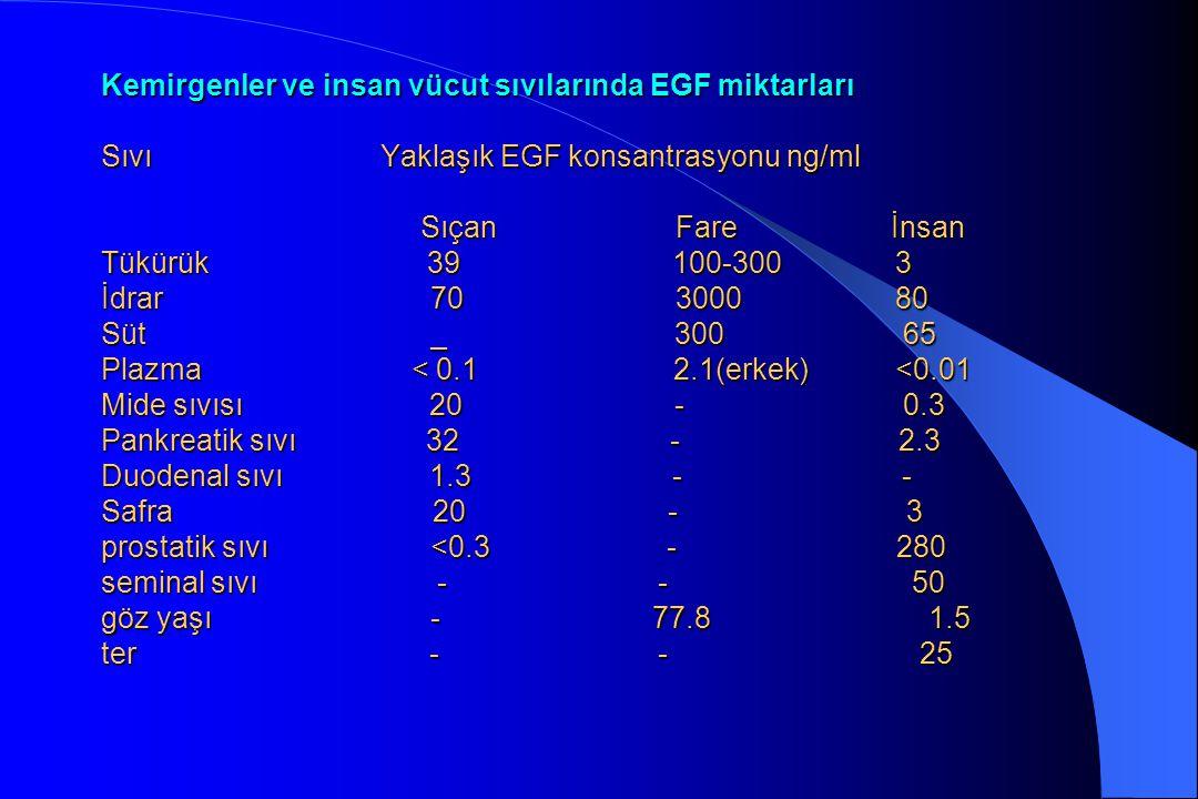 Kemirgenler ve insan vücut sıvılarında EGF miktarları Sıvı Yaklaşık EGF konsantrasyonu ng/ml Sıçan Fare İnsan Tükürük 39 100-300 3 İdrar 70 3000 80 Süt _ 300 65 Plazma < 0.1 2.1(erkek) <0.01 Mide sıvısı 20 - 0.3 Pankreatik sıvı 32 - 2.3 Duodenal sıvı 1.3 - - Safra 20 - 3 prostatik sıvı <0.3 - 280 seminal sıvı - - 50 göz yaşı - 77.8 1.5 ter - - 25