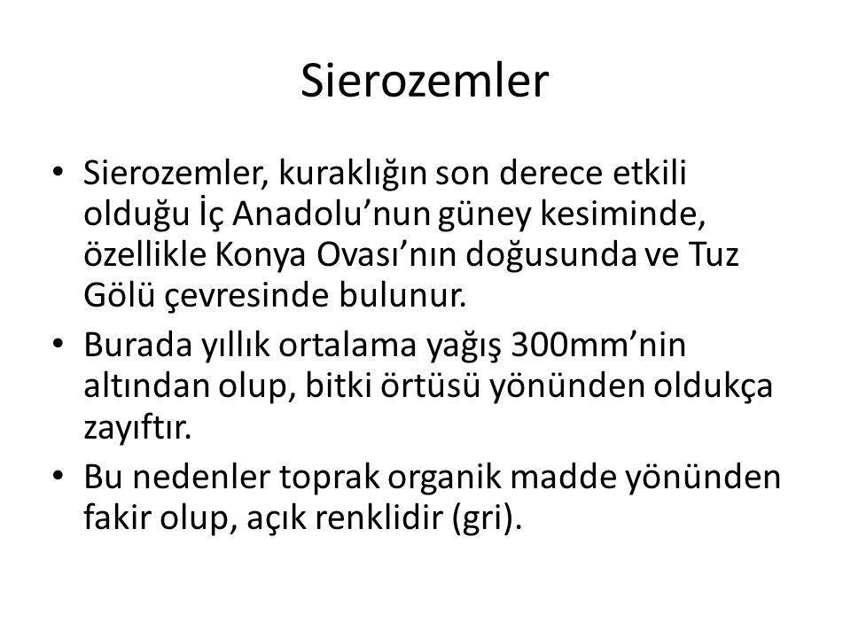 Sierozemler