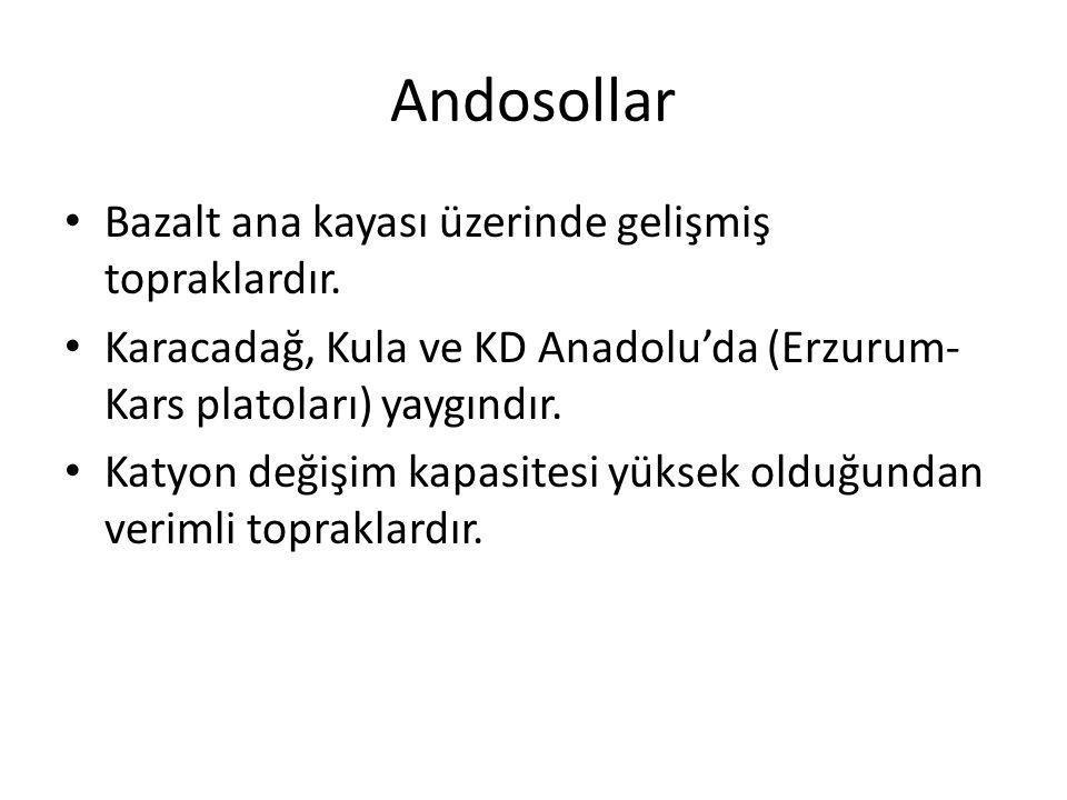 Andosollar Bazalt ana kayası üzerinde gelişmiş topraklardır.