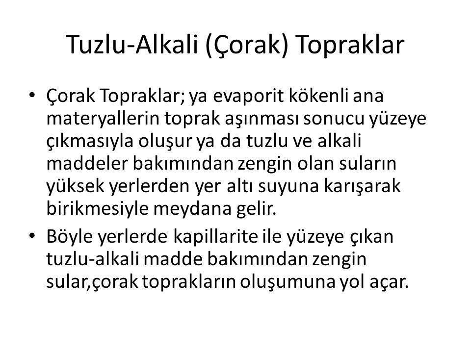 Tuzlu-Alkali (Çorak) Topraklar