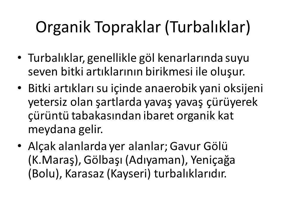 Organik Topraklar (Turbalıklar)