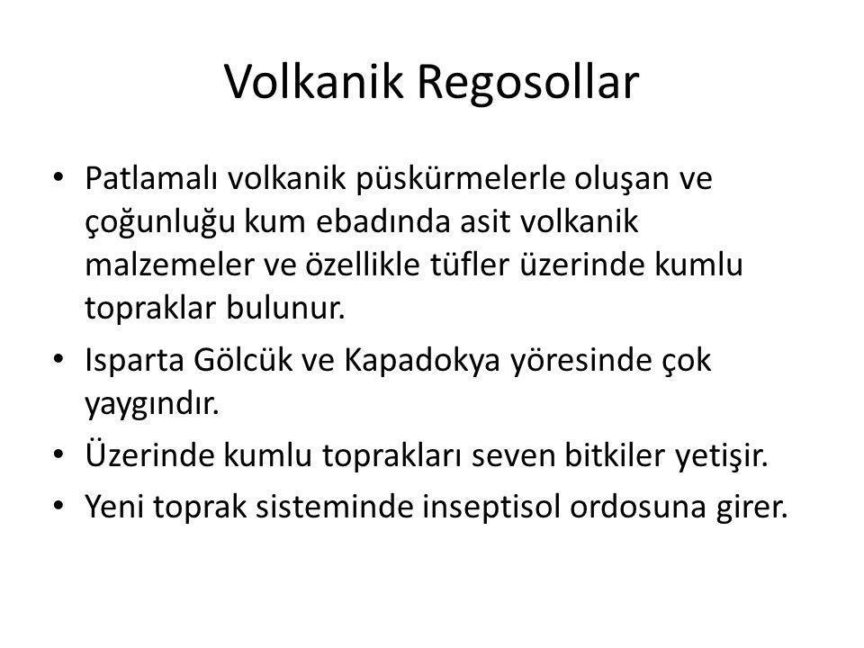 Volkanik Regosollar