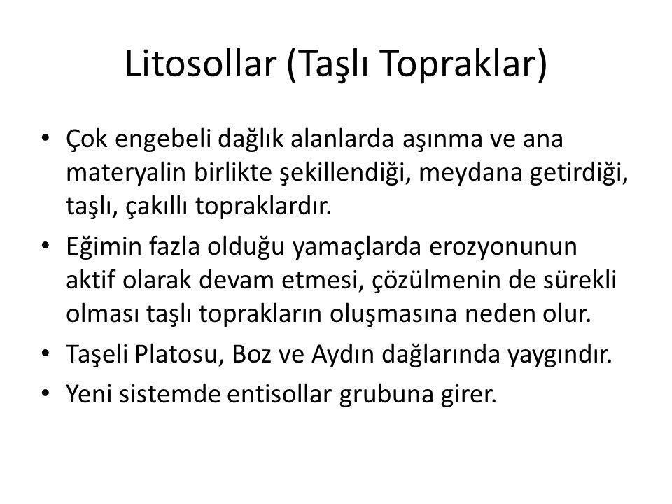 Litosollar (Taşlı Topraklar)