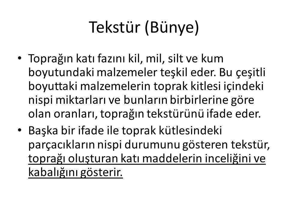 Tekstür (Bünye)