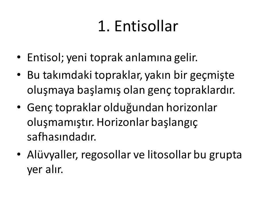1. Entisollar Entisol; yeni toprak anlamına gelir.