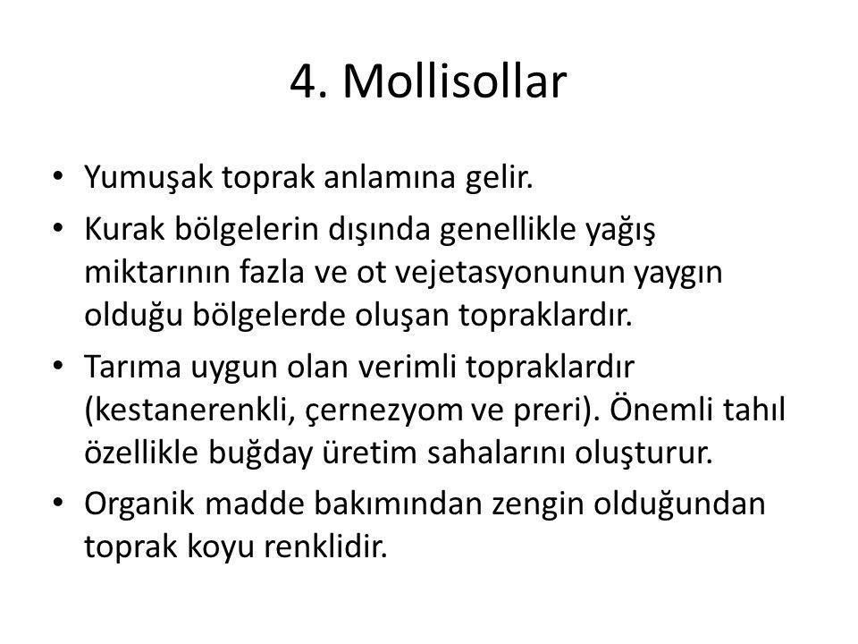 4. Mollisollar Yumuşak toprak anlamına gelir.