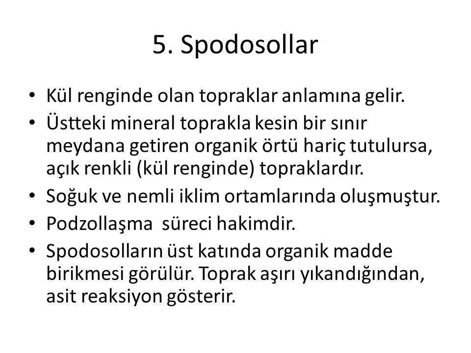 5. Spodosollar Kül renginde olan topraklar anlamına gelir.