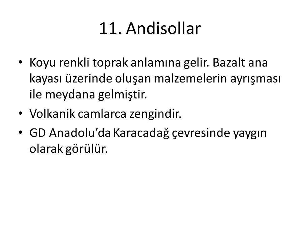 11. Andisollar Koyu renkli toprak anlamına gelir. Bazalt ana kayası üzerinde oluşan malzemelerin ayrışması ile meydana gelmiştir.
