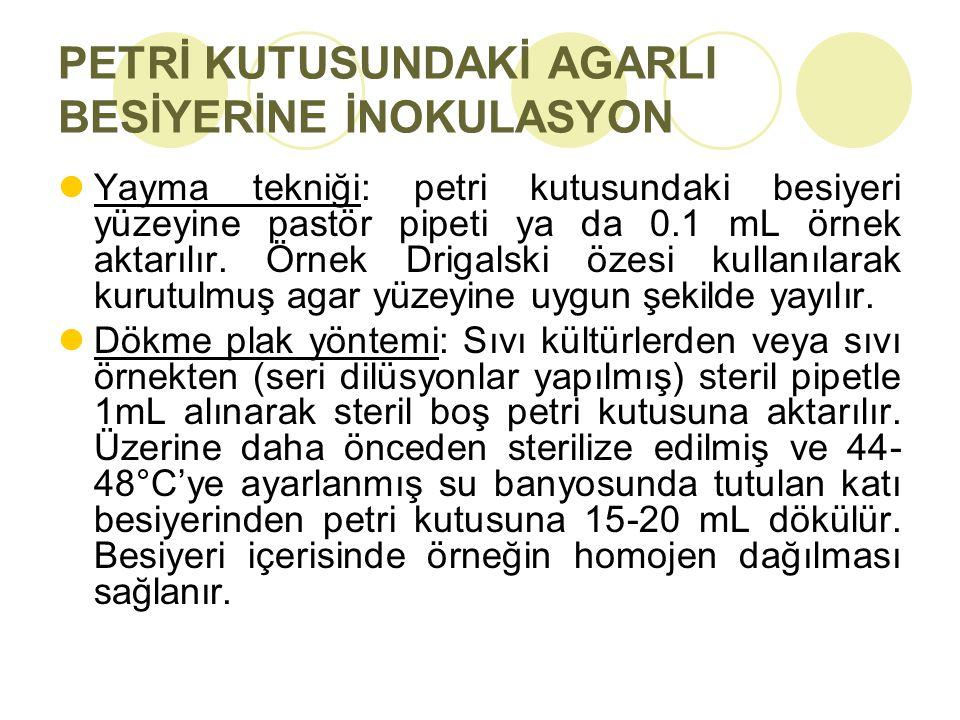 PETRİ KUTUSUNDAKİ AGARLI BESİYERİNE İNOKULASYON