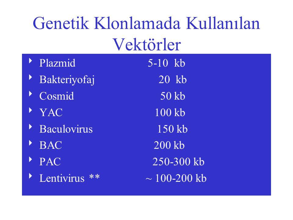 Genetik Klonlamada Kullanılan Vektörler