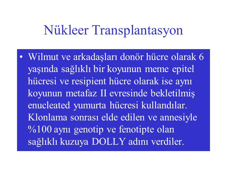 Nükleer Transplantasyon