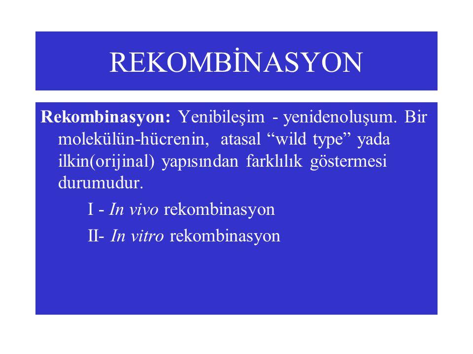 REKOMBİNASYON