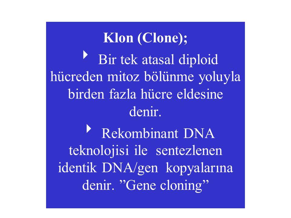 Klon (Clone);  Bir tek atasal diploid hücreden mitoz bölünme yoluyla birden fazla hücre eldesine denir.