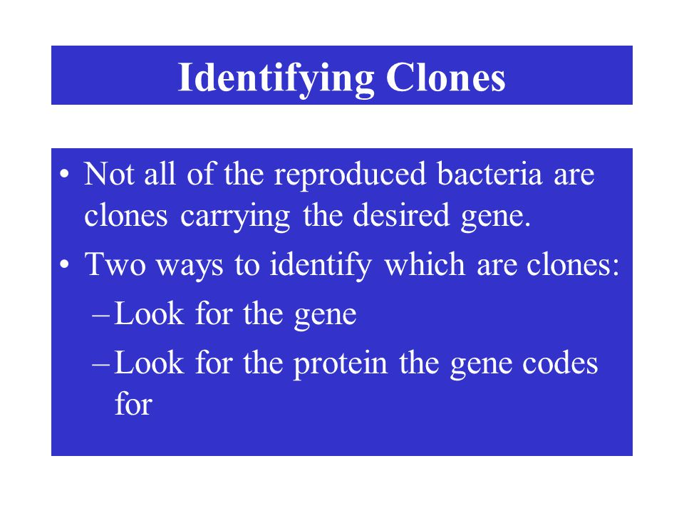 Identifying Clones Not all of the reproduced bacteria are clones carrying the desired gene. Two ways to identify which are clones: