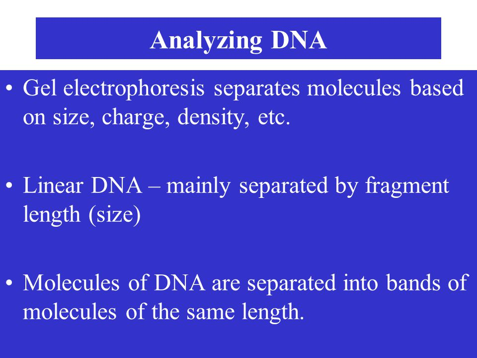 Analyzing DNA Gel electrophoresis separates molecules based on size, charge, density, etc. Linear DNA – mainly separated by fragment length (size)