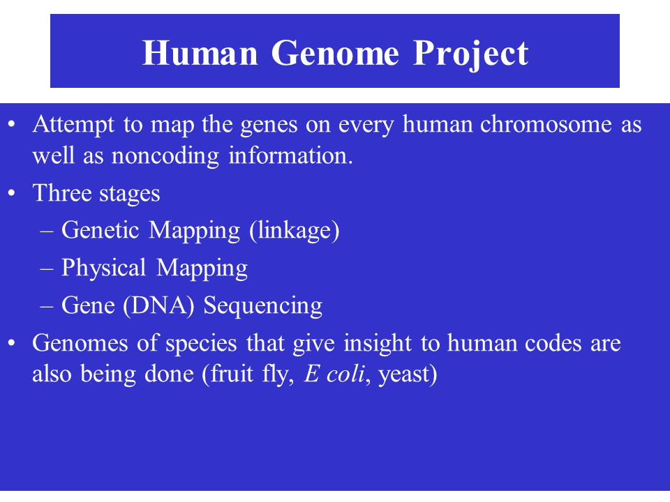 Human Genome Project Attempt to map the genes on every human chromosome as well as noncoding information.