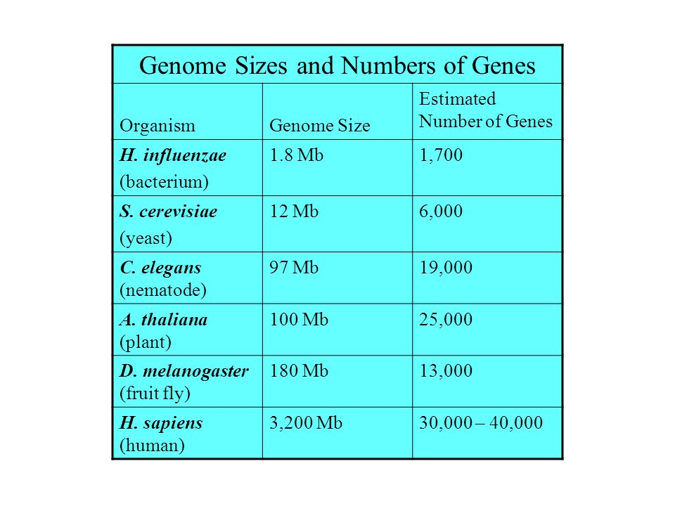 Genome Sizes and Numbers of Genes
