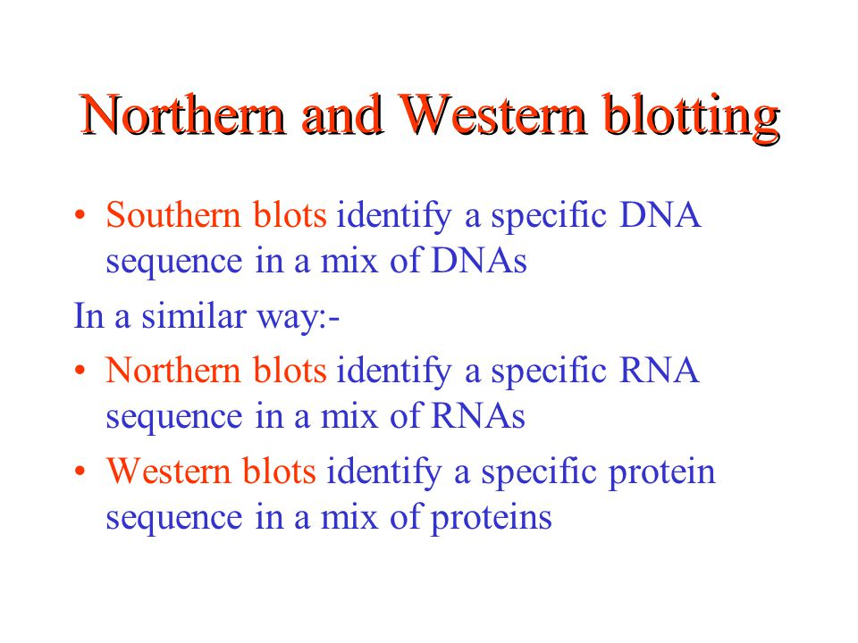 Northern and Western blotting