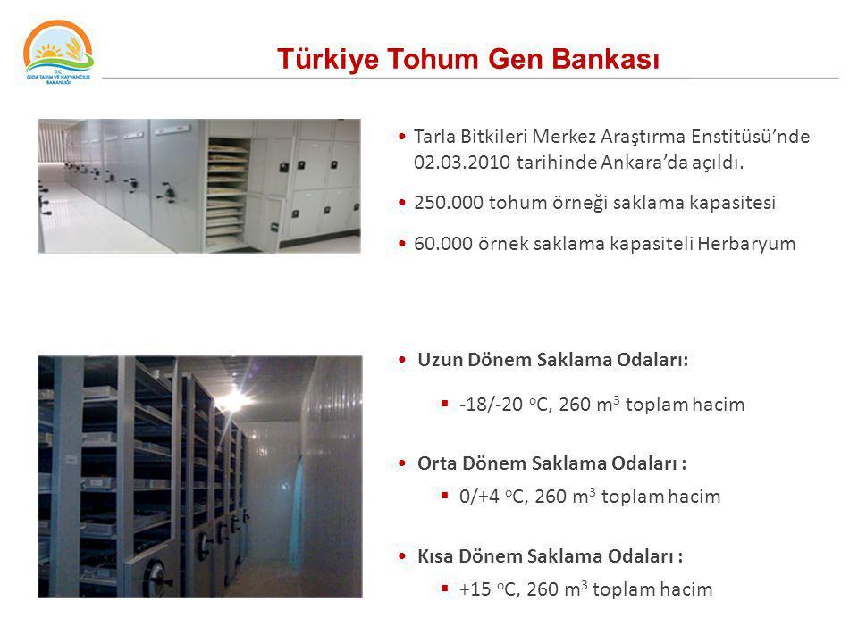 Türkiye Tohum Gen Bankası