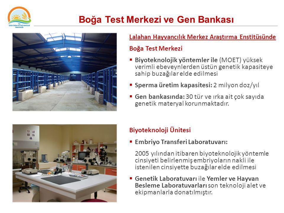 Boğa Test Merkezi ve Gen Bankası