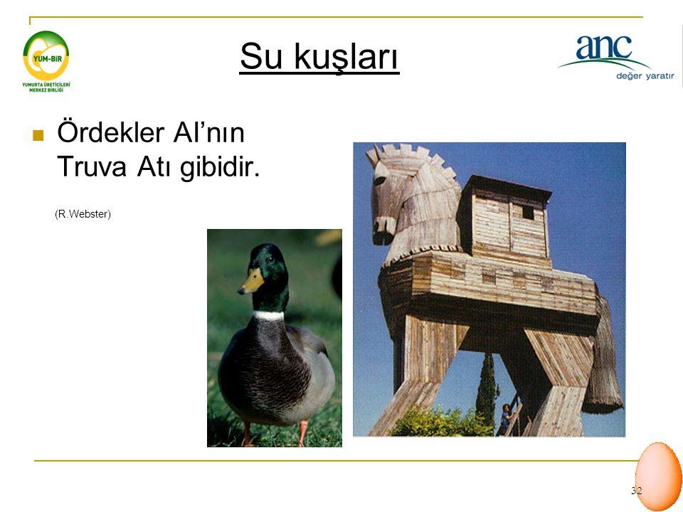 Su kuşları Ördekler AI'nın Truva Atı gibidir. (R.Webster)