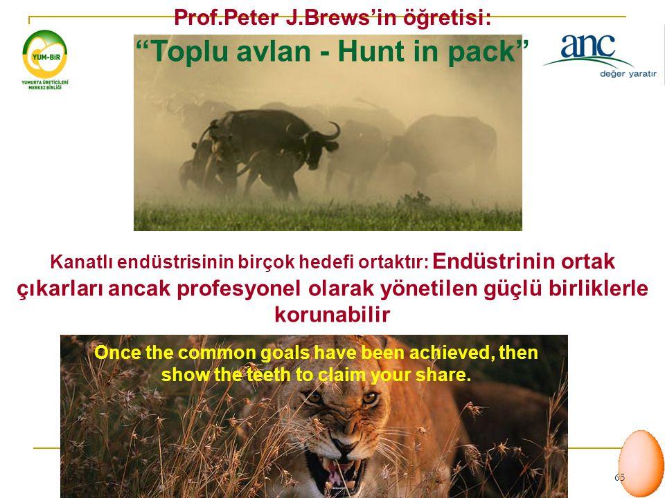Prof.Peter J.Brews'in öğretisi: Toplu avlan - Hunt in pack
